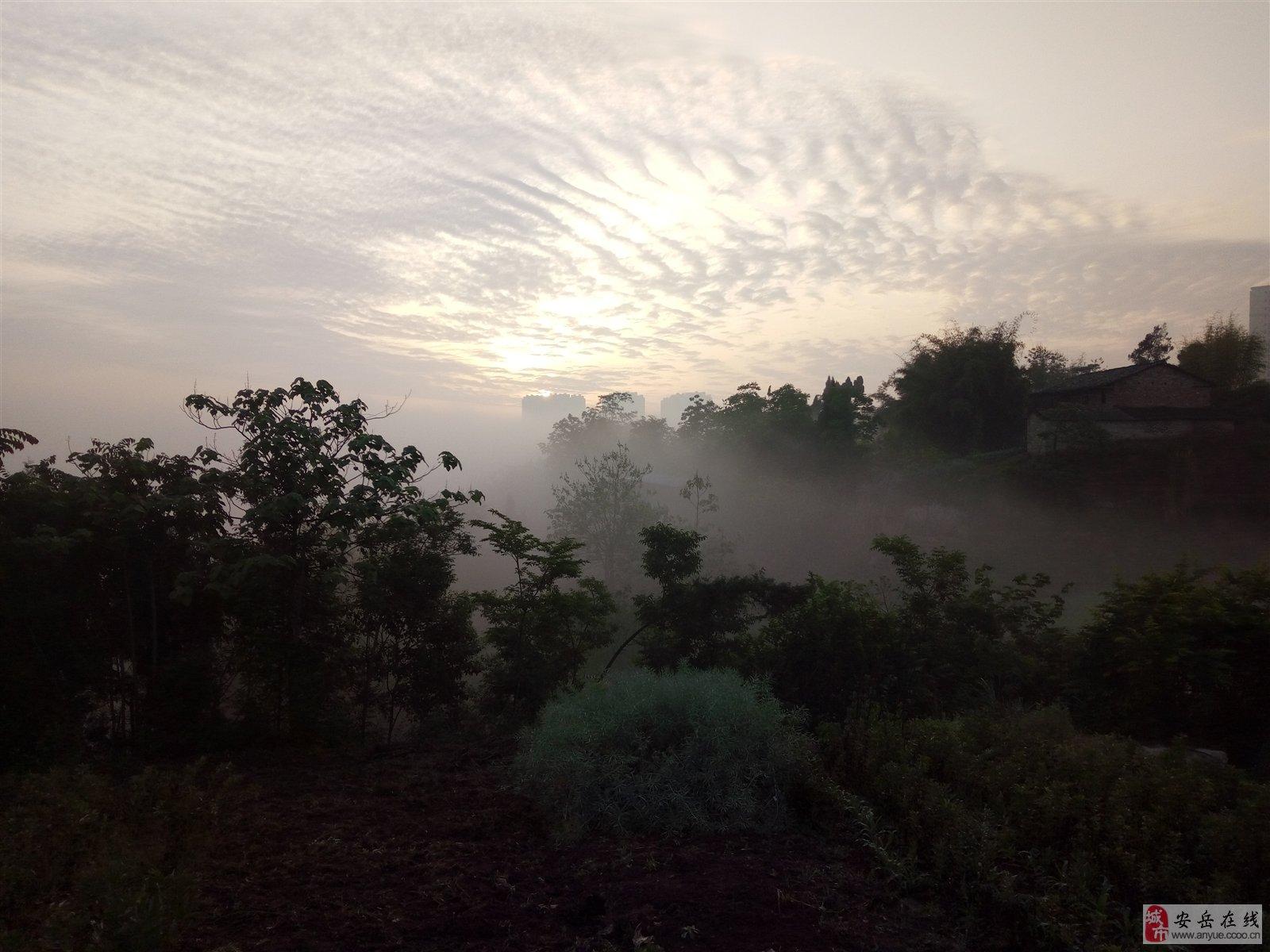 雾中树木黑白画
