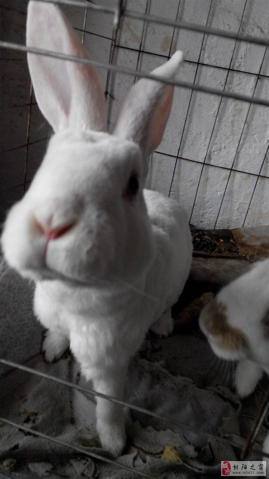 手机壁纸可爱我兔子