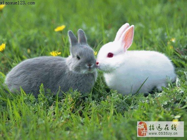 微信头像动物可爱超萌兔