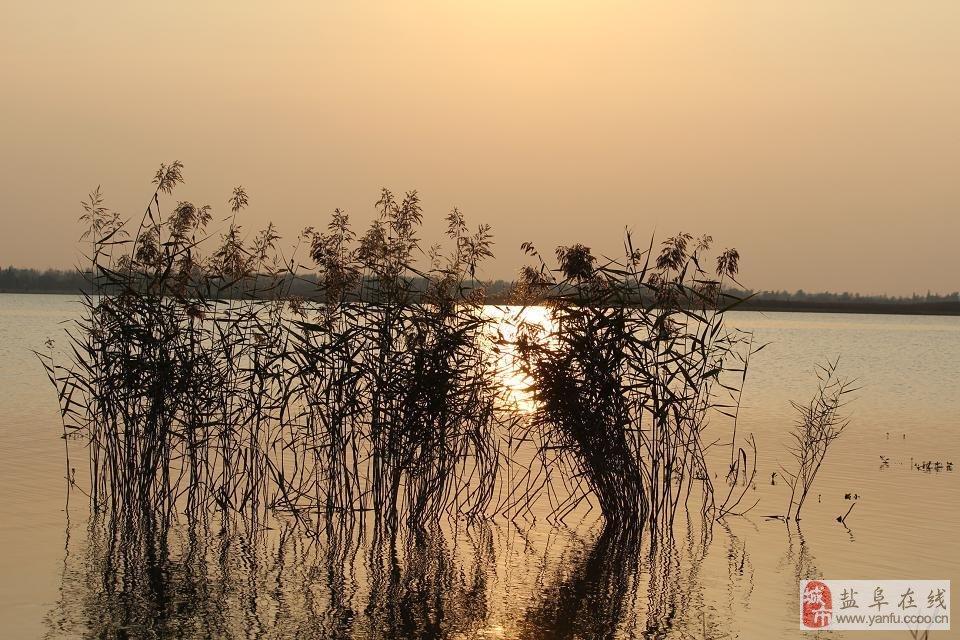 让你看看阜宁金沙湖到底有多美