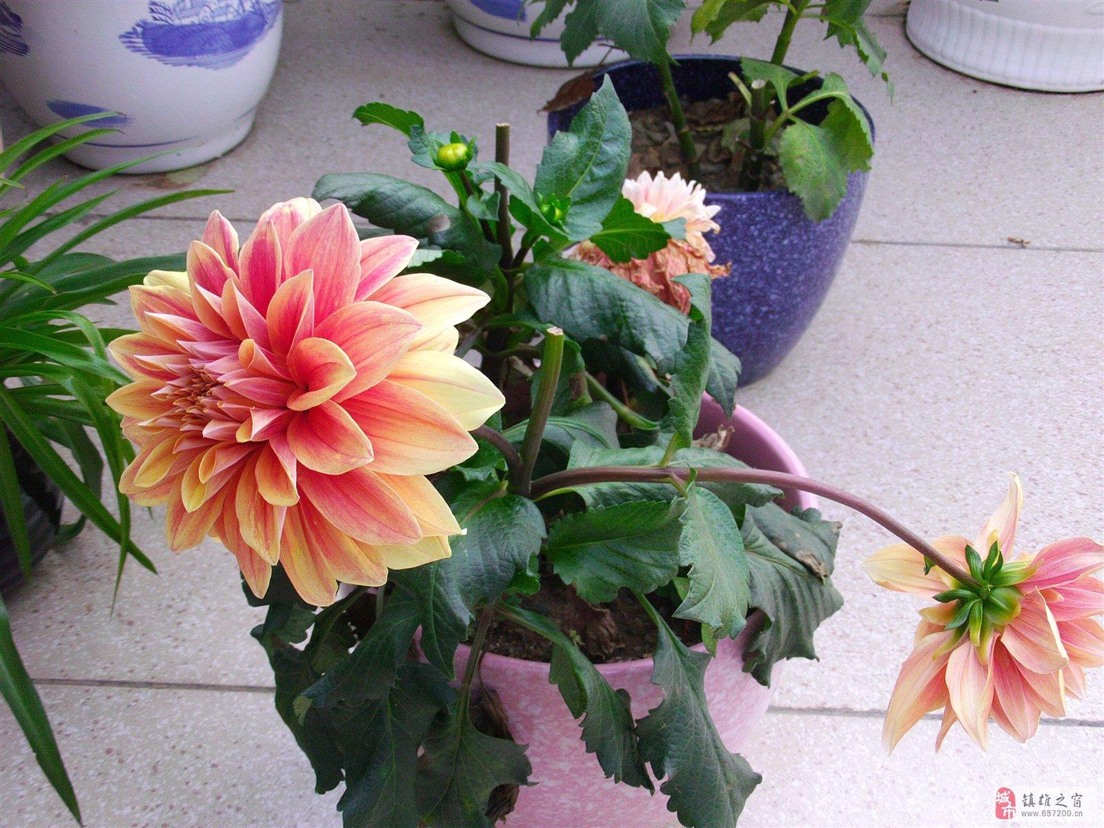 夏天的花花世界