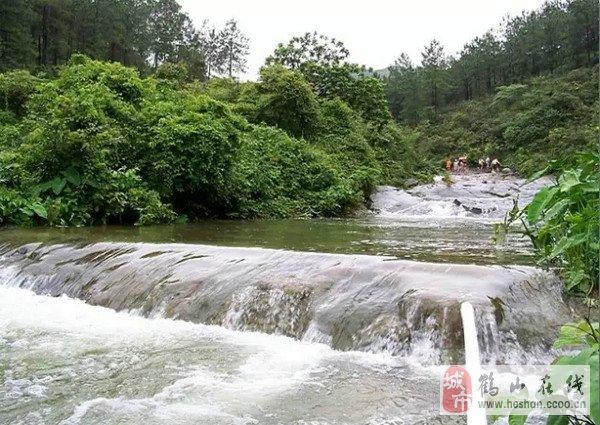 本地焦点 鹤山见闻    位于鹤山古劳的仙鹤湖山青水秀,悠然明净,空气