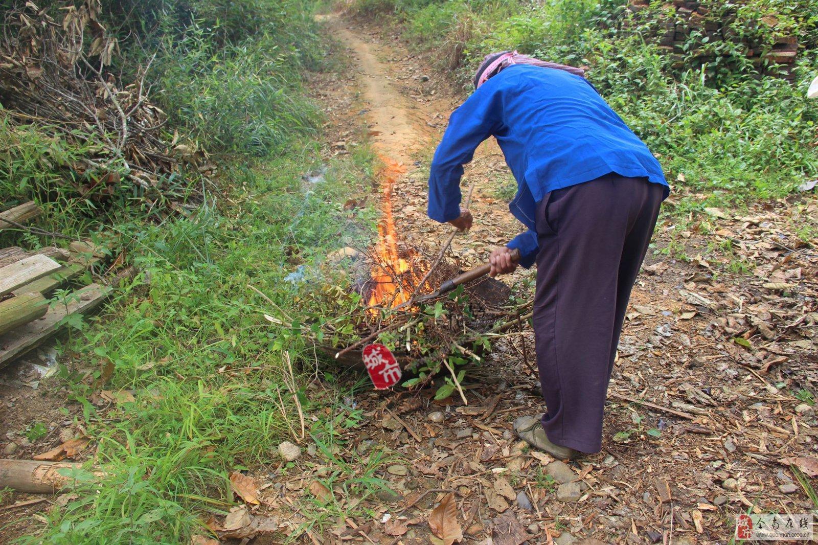 大火将这些纯天然树枝重生!
