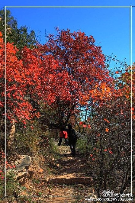 壁纸 枫叶 风景 红枫 树 440_660 竖版 竖屏 手机