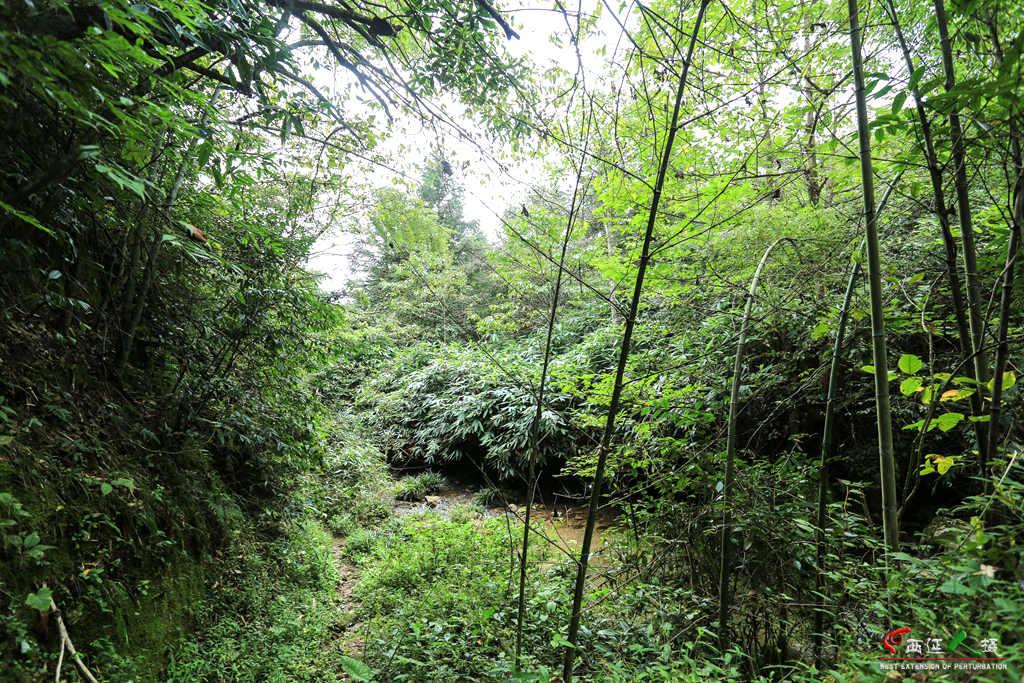 壁纸 风景 森林 桌面 1024_683