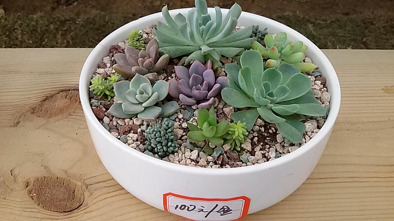 美丽漂亮的多肉植物