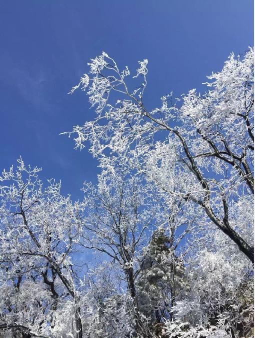 鸡公山雪景,美得简直了
