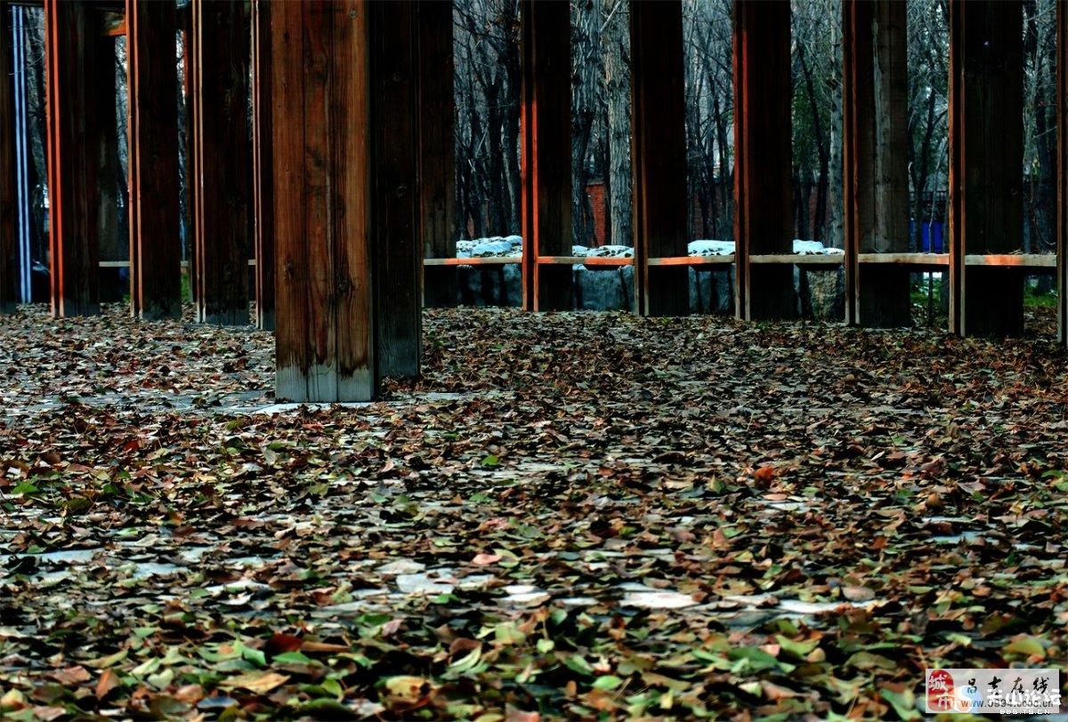 昌吉市森林公园初冬之暮光