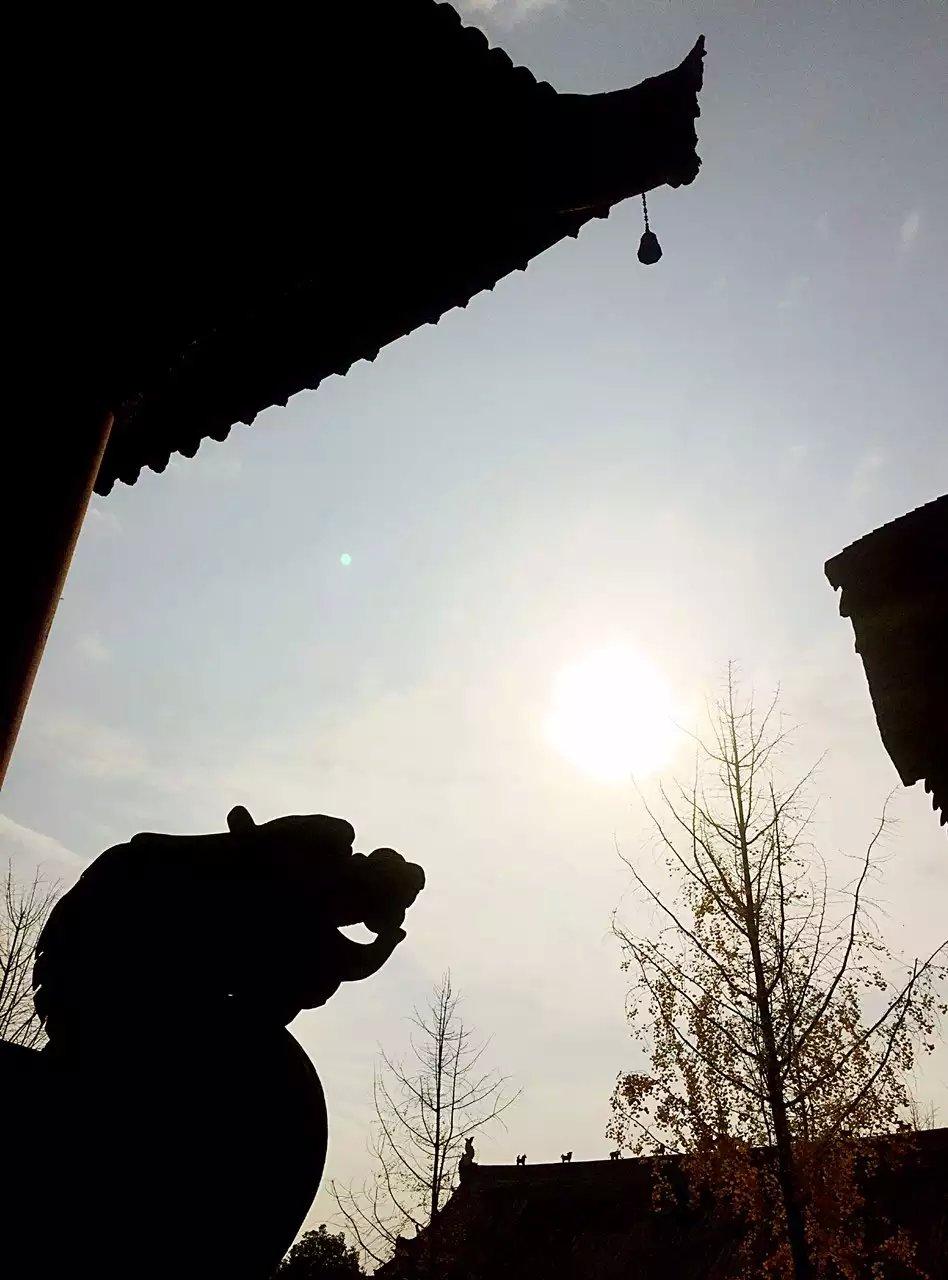 冬日金黄――房湖银杏
