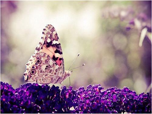 微信花朵蝴蝶唯美头像