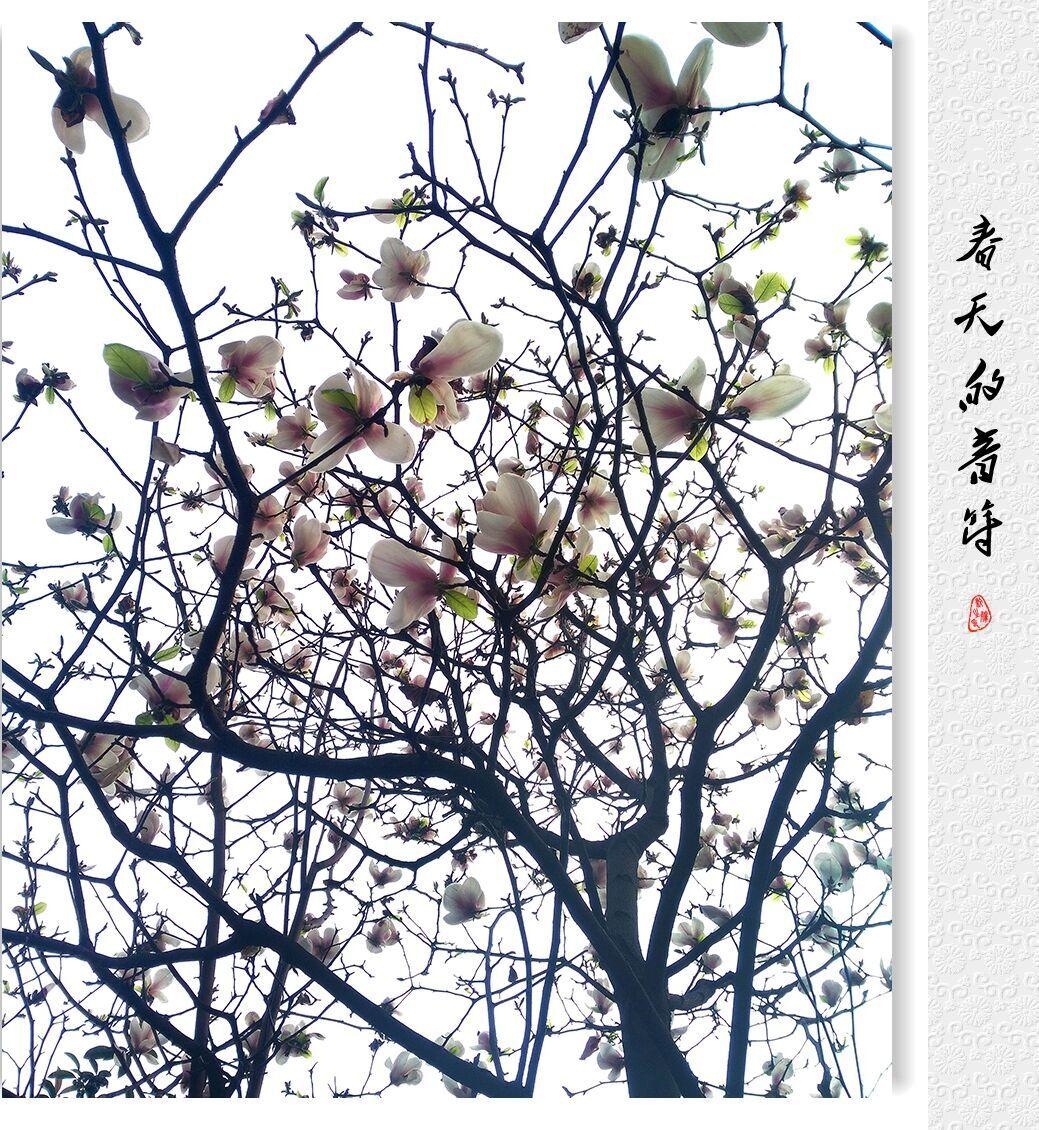春天的音符