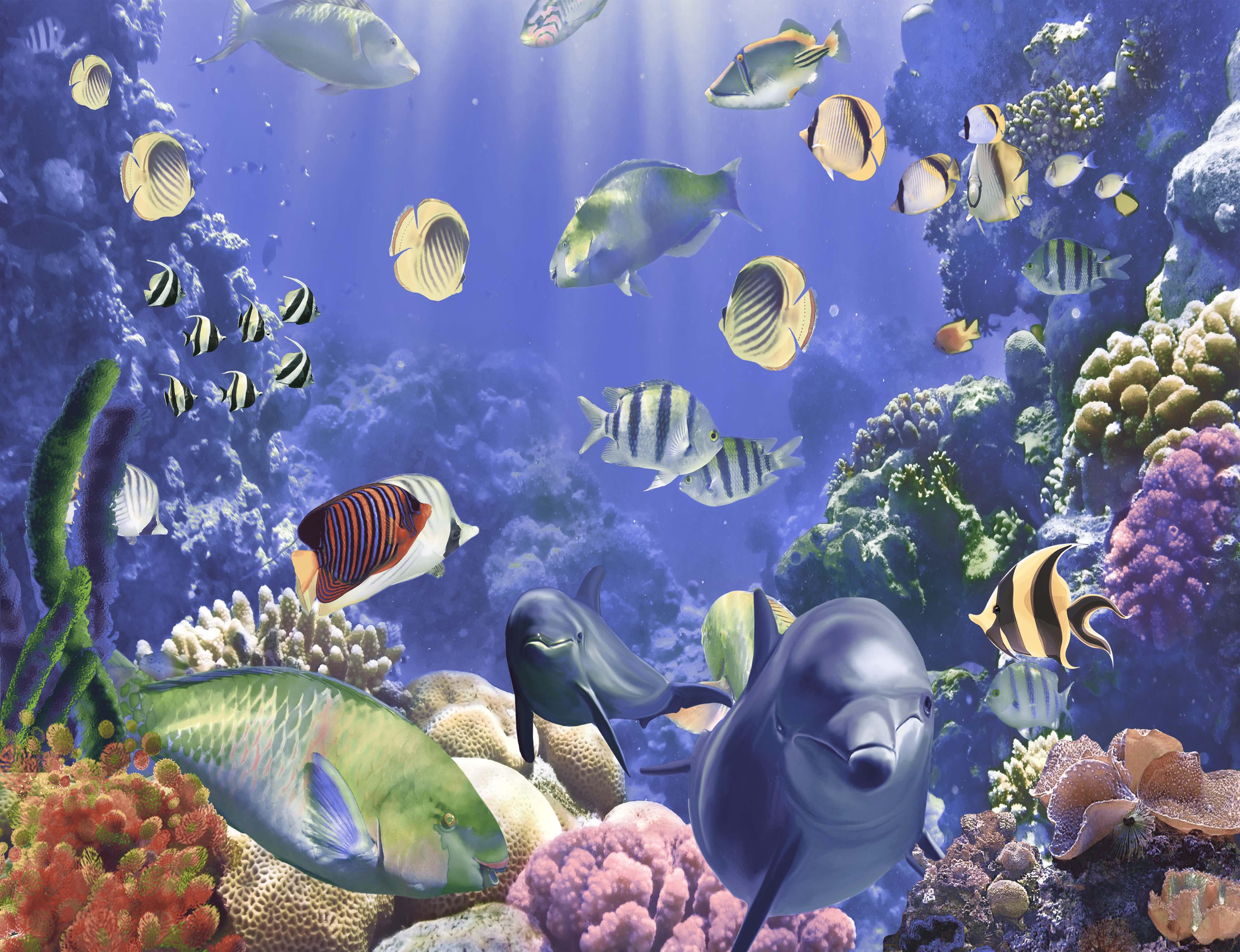 風景桌面壁紙海洋世界圖片大全_風景桌面壁紙海洋