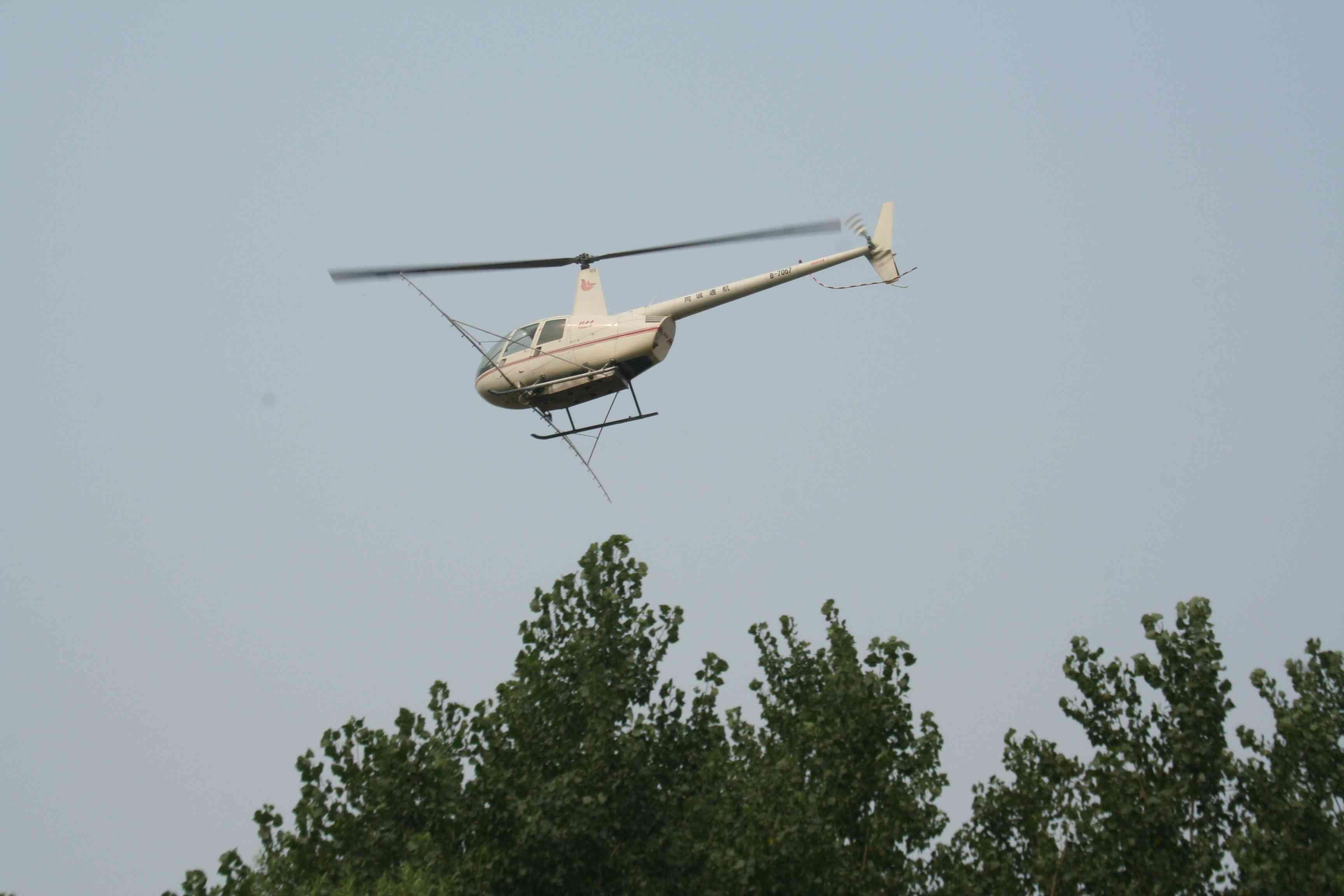 焦作:直升飞机防治杨树食叶害虫