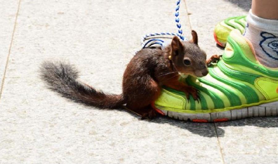 南京一儿童玄武湖公园内遛松鼠 引游客驻足围观