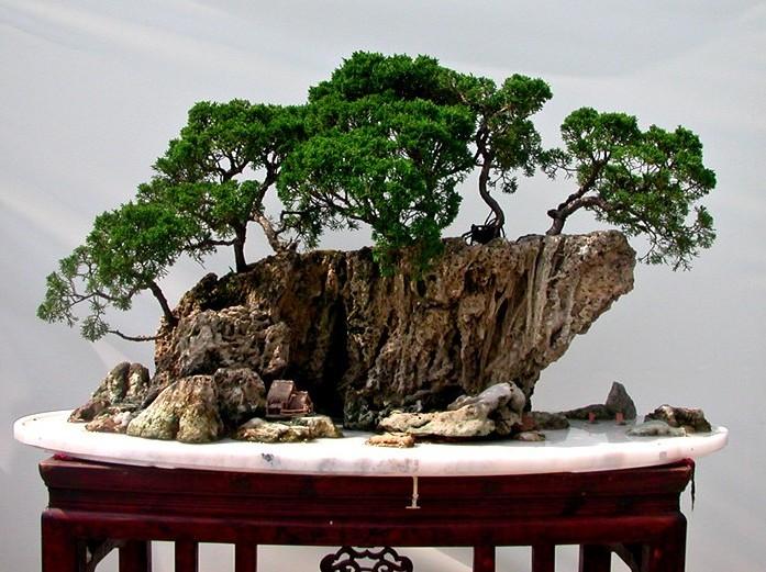"""国庆来弥勒赶""""花街"""",看奇石根雕,赏精美盆景"""