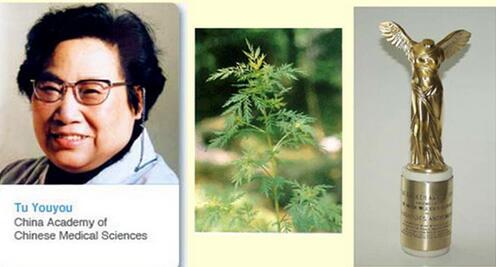 """[药乡话药]屠呦呦提取""""青蒿素""""的植物青蒿宕昌是分布"""