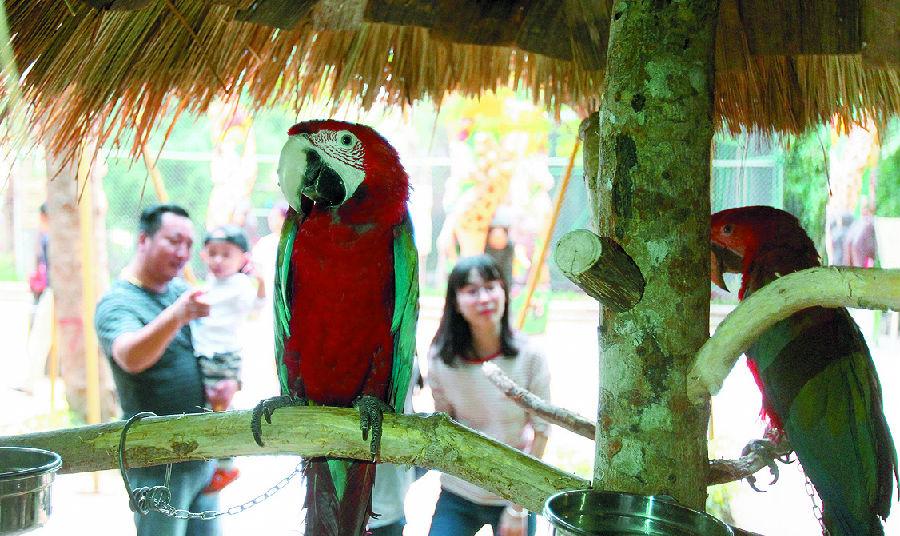 三亚彩色动物园昨日开园试营业