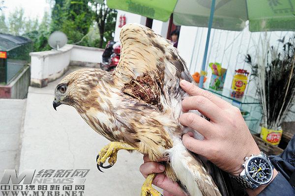 市民保护野生动物意识增强