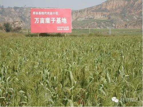 农业建设展板背景
