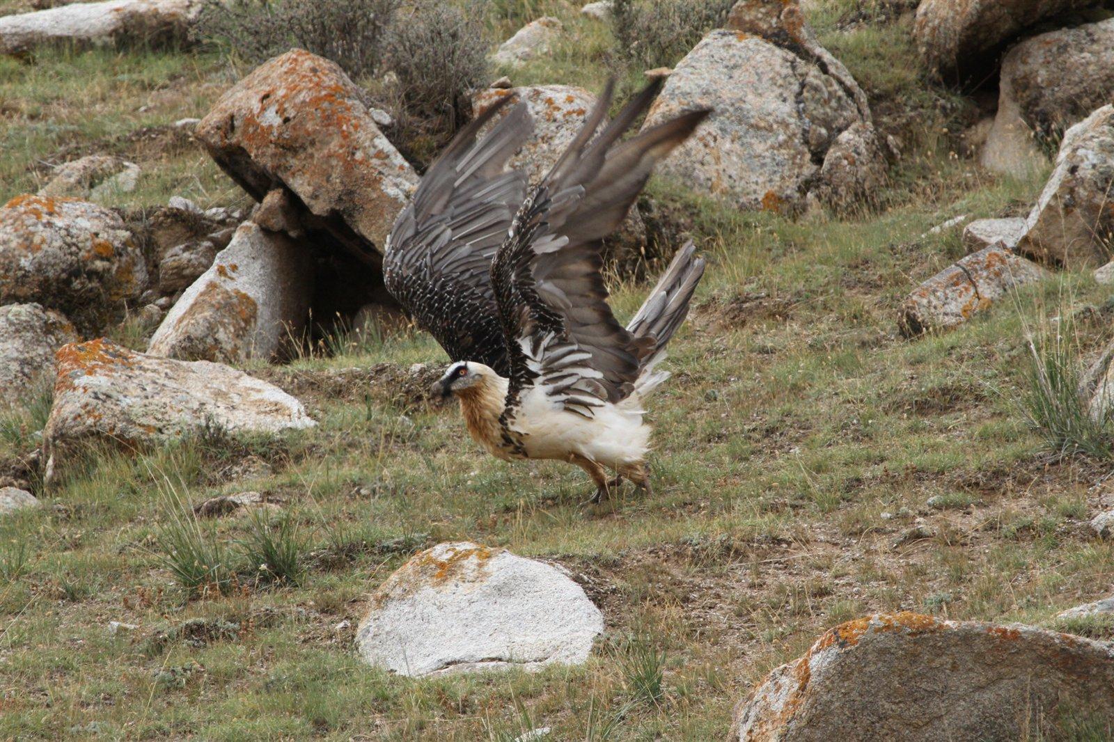 德令哈珍稀野生动种群保护见成效