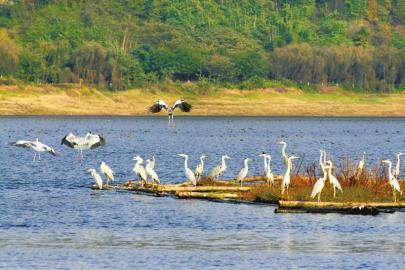 白琵鹭属国家Ⅱ级重点保护的鸟类
