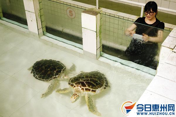 龟升为国家一级保护动物