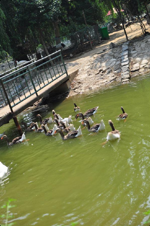 郑州市动物园进行景观改造