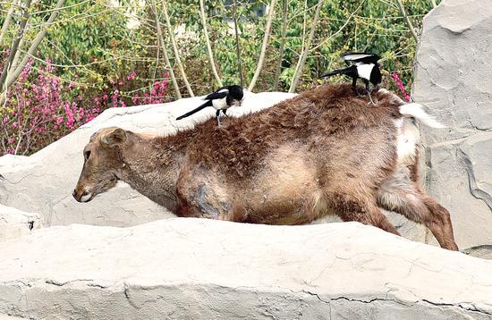记者在郑州市动物园采访时