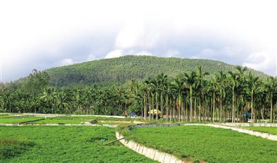 琼海长坡:用休闲农业打造百姓幸福家园  长坡椰韵小镇 长坡怡人的风景