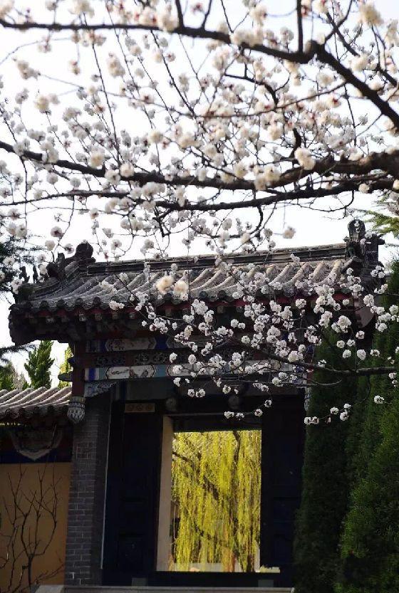 南山禅寺,文峰塔