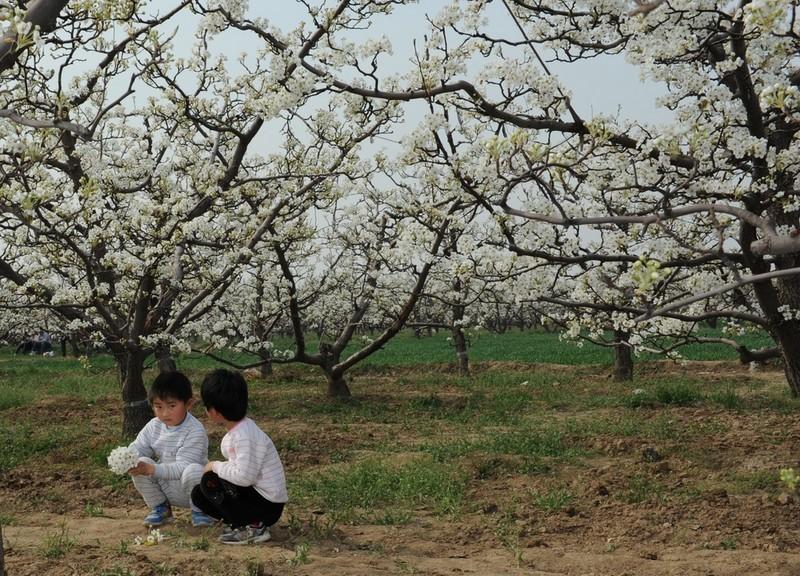 四平梨树天气预报