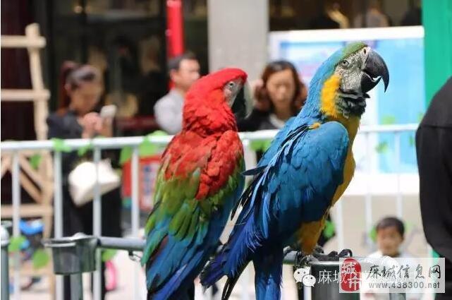 杜鹃木木雕蓝孔雀图片