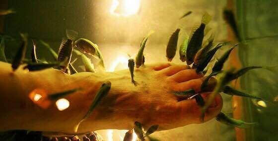 土耳其亲亲鱼鱼疗spa,专为都市人打造的休闲理疗方式图片