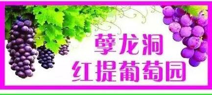 孽龙洞红提葡萄园