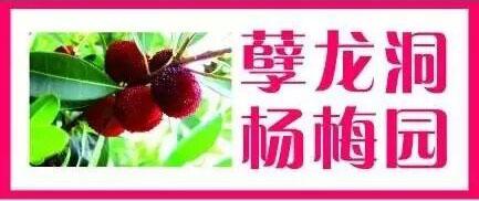 孽龙洞杨梅园