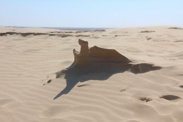 参考信息:5月初内蒙古库伦旗塔敏查干沙漠温度在8度-16度左右.