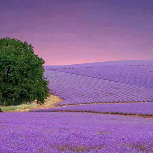 紫紫的天空