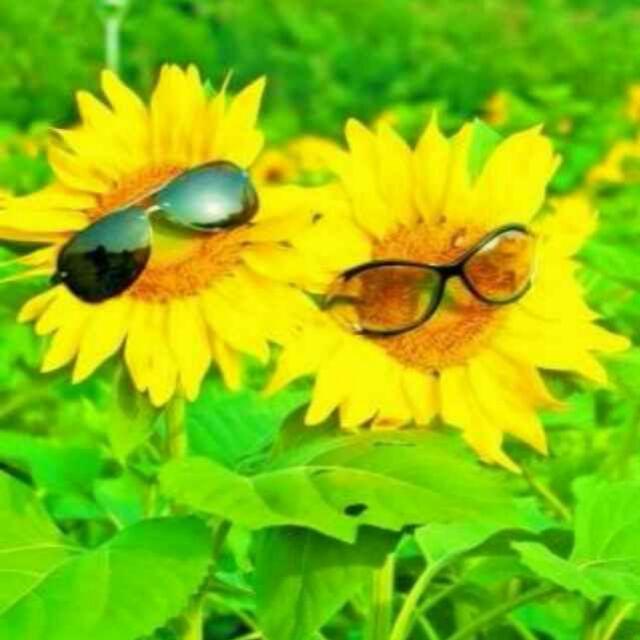 向日葵��