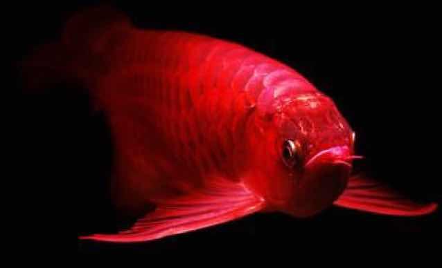 罗山在线-小鱼