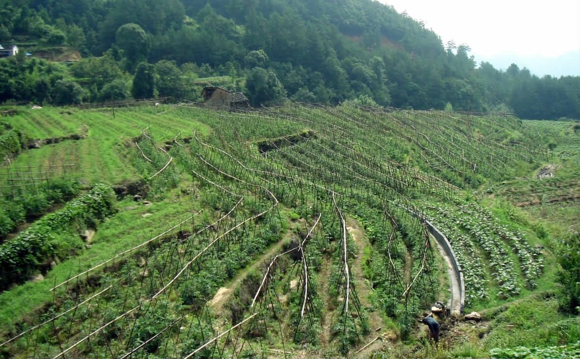 山地蔬菜种植基地